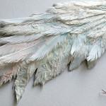 Herons wing