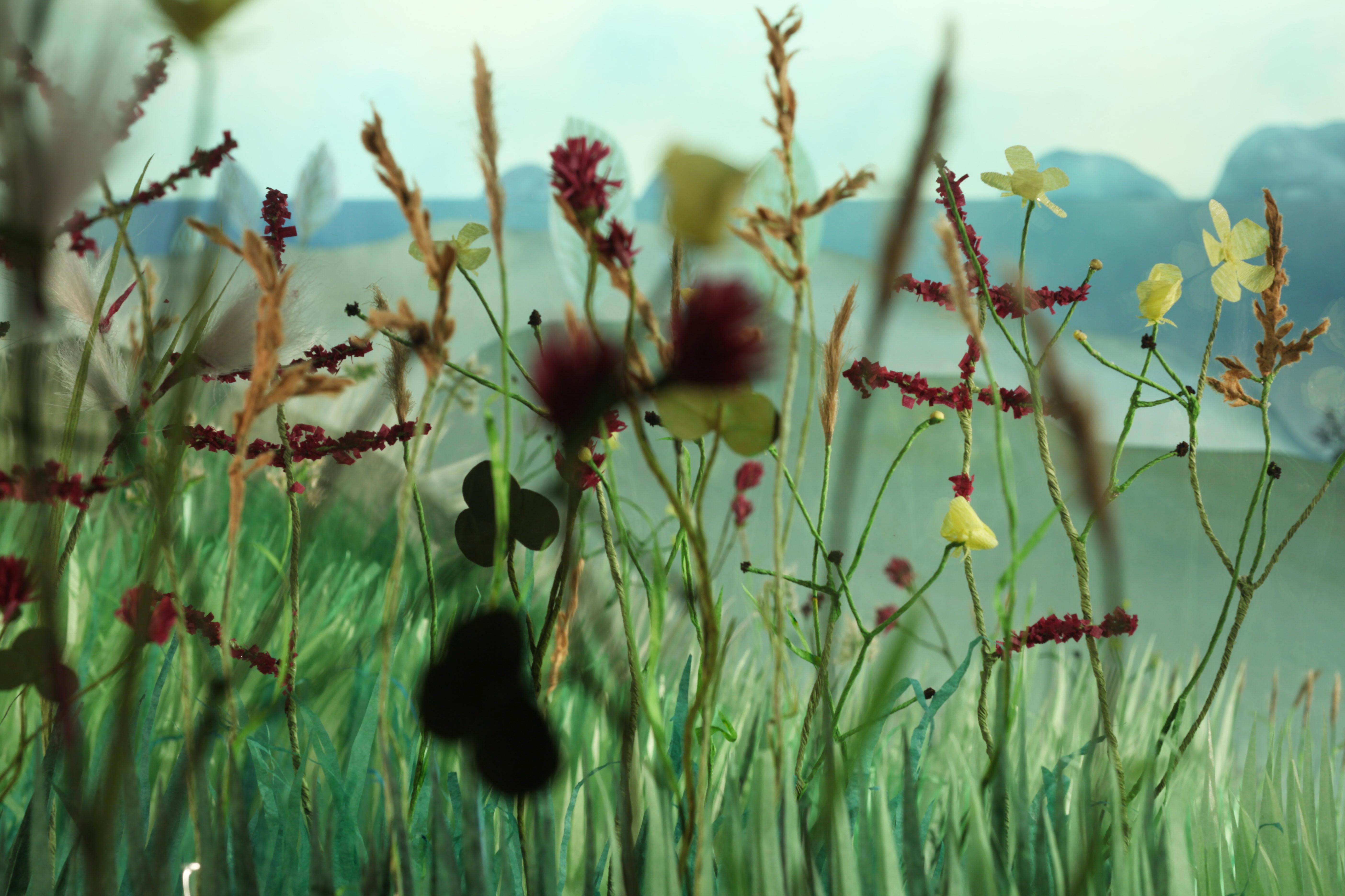 blomstereng2